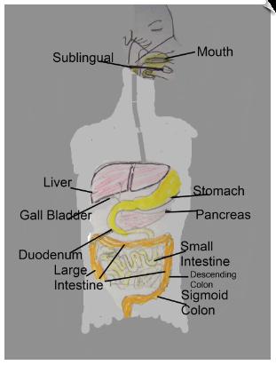GI tract health benefits of alkaline water
