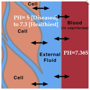 ph-in-blood-and-around-cells
